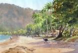 Cassowary, Etty Bay